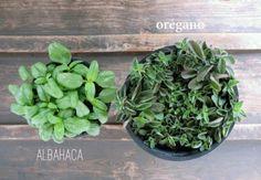 plantas para el trabajo