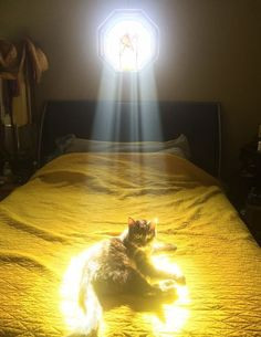The cat Savior has arisen