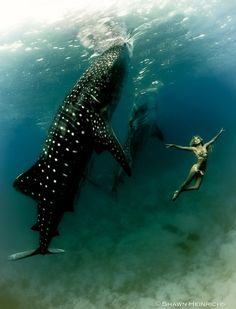 Shawn Heinrichs. save the whale sharks.