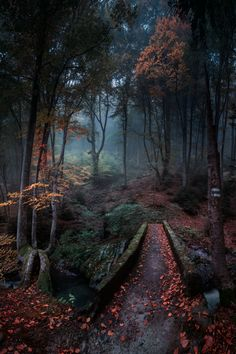 Balkan Mountains, Bulgaria | Photos. Capture. Nature. Natural. Earth. View. Landscapes. Animals. Love. Beauty. Land. Water. Wind. Sunlight. Sunsets. Dusk. Seasons. Autumn. Solstice. Life. Skyline. Truth.