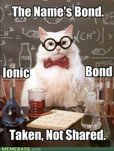 Best. Chemistry Cat. Ever.