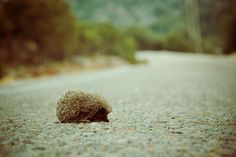 A lonely hedgehog
