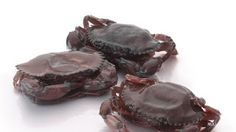 MANUFACTURER AND AGRO INDUSTRIES: SHELLED CRABS