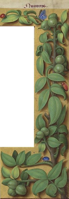 L'ouvrage, de 30,5 cm par 20 cm, est constitué de 476 pages en latin dont 49 grandes miniatures en pleine page et 337 enluminures marginales. Il est remarquable par le travail d'enluminure de chaque marge de page, sur lesquelles figure la représentation réaliste sur fond doré de 337 plantes légendées en latin et en français. On y trouve des fleurs, cultivées ou sauvages, des arbustes, quelques arbres, et une grande diversité d'insectes et de petits animaux de la campagne.