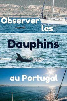 Observer les dauphins dans l'estuaire du Sado, près de Lisbonne : une croisière hors du temps