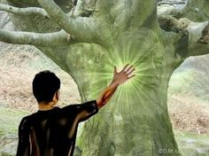 Reiki - Les Secrets de l'énergie des arbres : Savez vous que l'on peut se connecter à un arbre ? La sylvothérapie est une pratique ancienne venue du Japon pour - Amazing Secret Discovered by Middle-Aged Construction Worker Releases Healing Energy Through The Palm of His Hands... Cures Diseases and Ailments Just By Touching Them... And Even Heals People Over Vast Distances...