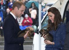 Pin for Later: The Royal Tour — Now With Puppies and More George!