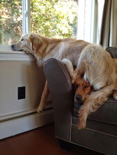 You make a good pillow. #imgur