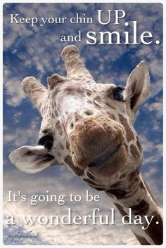 Inspirational giraffe just wants you to be happy. Thanks anonymous giraffe! Animals And Pets, Baby Animals, Funny Animals, Cute Animals, Smiling Animals, Jungle Animals, Wild Animals, Beautiful Creatures, Animals Beautiful