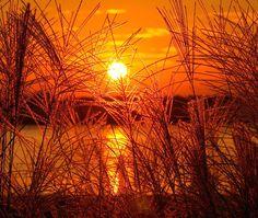 Sonnenuntergang, Gold, Golden, Meer, Hafer, Weizen