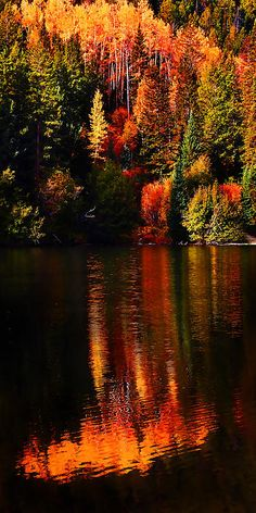 Autumn Lakeshore Reflections at Cottonwood Lake near Buena Vista, Colorado; photo by Terril Heilman Beautiful World, Beautiful Places, Amazing Places, Beautiful Scenery, All Nature, Amazing Nature, Belle Photo, Pretty Pictures, Fall Pictures