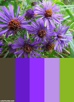 New England Aster Color Scheme from colorhunter.com