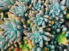 Hey, I found this really awesome Etsy listing at https://www.etsy.com/listing/88348143/sedum-photograph-nature-photography