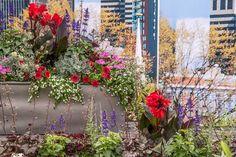 The Massachusetts Garden at the RHS Hampton Court Flower Show 2015.