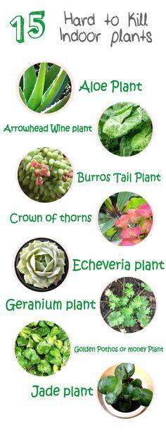 15 hard to kill indoor plants
