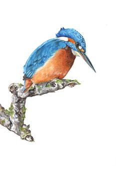 Kingfisher painting bird watercolor painting by LouiseDeMasi, $20.00