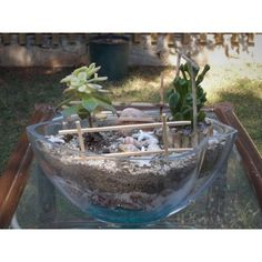 Κήποι Μινιατούρες - € 20,00 - Vendora.gr Terrarium, Greece, Plants, Google, Decor, Terrariums, Greece Country, Decoration, Plant
