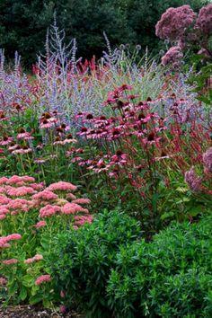 Mooie plant combinatie