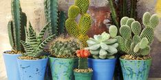 6 Φυτά ανθεκτικά στο κρύο για το μπαλκόνι σου το χειμώνα!   ediva.gr Monstera Deliciosa, Ficus Lyrata, Madagascar Dragon Tree, Lucky Plant, Cast Iron Plant, Cactus Planta, Lucky Bamboo, Best Indoor Plants, Low Maintenance Plants