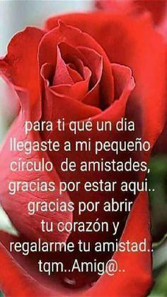 Rosas Con Poemas De Amor Para Celular Romantic Pinterest