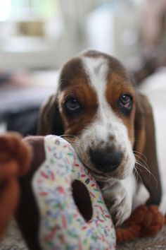 I don't think this is a real donut... #dogs #play