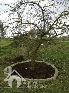 Häuslebauerplaudereien: Apfelbaum in Szene gesetzt