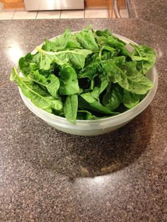 and in abundance from our Our x foot garden has produce 25 - containers (what a person purchases in the grocery store) full, thus far! Grocery Store, Lettuce, Abundance, Spinach, Gardening, Vegetables, Food, Lawn And Garden, Essen