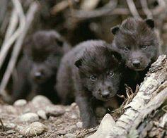 Wonderfulwolves