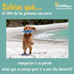 ¿Sabías que el 50% de las personas con #perro escogerían a su peludo antes que a su pareja para ir a una isla desierta? #frases www.hostaldog.com