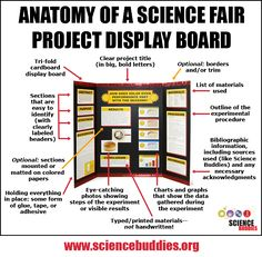 The Project Display Board is a key part of the fair project. Get a great visual look at important tips and reminders for putting together a great board. [Source: Science Buddies, www. Kid Science, High School Science Projects, Science Fair Experiments, Science Fair Projects Boards, 4th Grade Science, Middle School Science, Science Classroom, Science Chemistry, Science Fair Poster