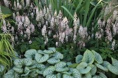 Tiarella & Brunnera Plant Combination These two will form quick and easy groundcover in partially shaded spots. Equally good for front of border positions, lining a woodland path, or underplanting trees and shrubs.