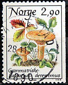 Norway. MUSHROOM.  LACTARIUS DETERRIMUS.  Scott 887 A293, Issued 1988 Apr 26, 2.90k,  Lithogravure, Perf. 13 1/2 x 13 on 3.