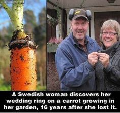 Good Job Carrot