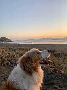 #newzealand #dog #muriwai #sunset Sounds Like, Summer Vibes, New Zealand, Corgi, Sunset, Animals, Corgis, Animales, Animaux
