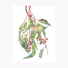 """Watercolour eucalyptus tree branch with white flowers & gumnuts."" Poster by zoyamakarova | Redbubble"