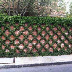 Love this pattern growing on the brick! How do we get this to grow?!