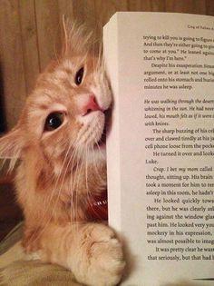 Os Gatinhos mais fofos da Internet *-*