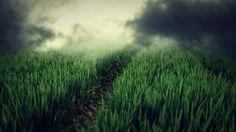 Green Field Fog HD Wallpaper