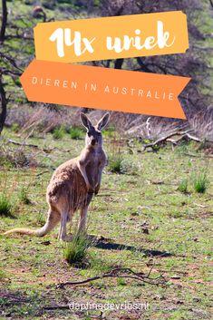 Roadtrip Australia, Quokka, New Zealand, Kangaroo, Travel Tips, Road Trip, Blog, Animals, Baby Bjorn