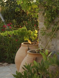 large urns to hold vines