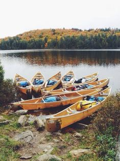 Love these canoes