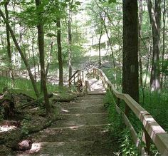 7 Trails to Run Before You Die....Mt. Airy Forest in Cincinnati is just one of them.