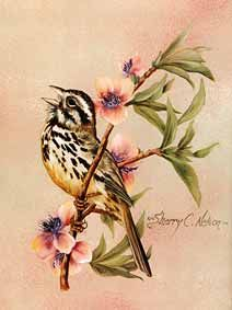 Sherry Nelson Decorative Painter | Painting Songbirds with Sherry C Nelson