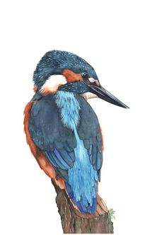 Kingfisher print of watercolor painting 5 by 7 by LouiseDeMasi