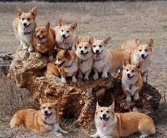 So many cuties!