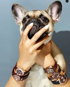 Man's Best Friends Elphie the French Bulldog and a Henry London Watch #AsSeenIn @stylistmagazine #HenryLondon #frenchbulldog #inthepress #luxury #watches #watchoftheday #watchaddict #watchesofinstagram #fashion #gold #vintage #style #cute #puppy #womw #armcandy #armparty by henrywatches - Coming soon to Grace & Co