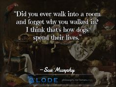 #inside #forget #dogs #murphy #philosophy #inspiring #quotation visit https://www.lode.de
