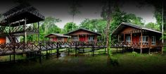 Sleep in the jungle at Borneo Nature Lodge in Sabah