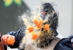 Photos: Giuseppe Cacace/AFP/Getty Images, Stefano Rellandini/Reuters    'Battle of the oranges in North Italy'