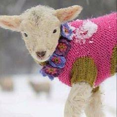 Two wool coats!